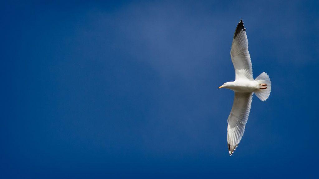 青空を自由に飛ぶかもめ